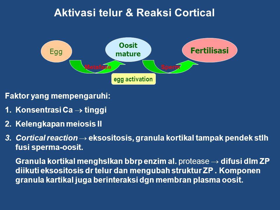 Aktivasi telur & Reaksi Cortical