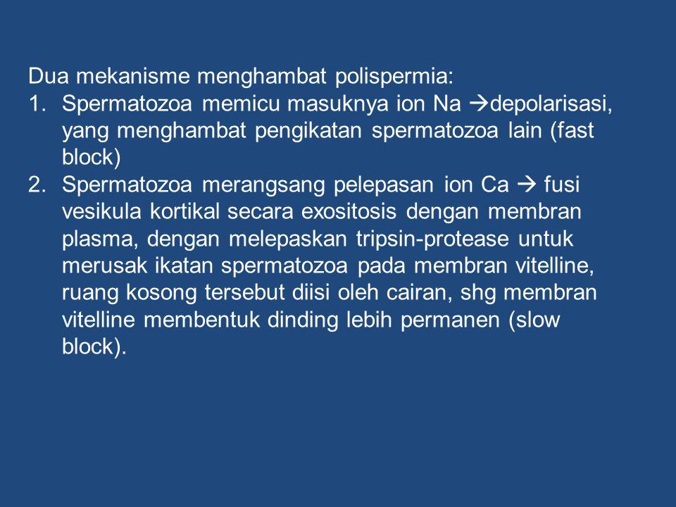 Dua mekanisme menghambat polispermia: