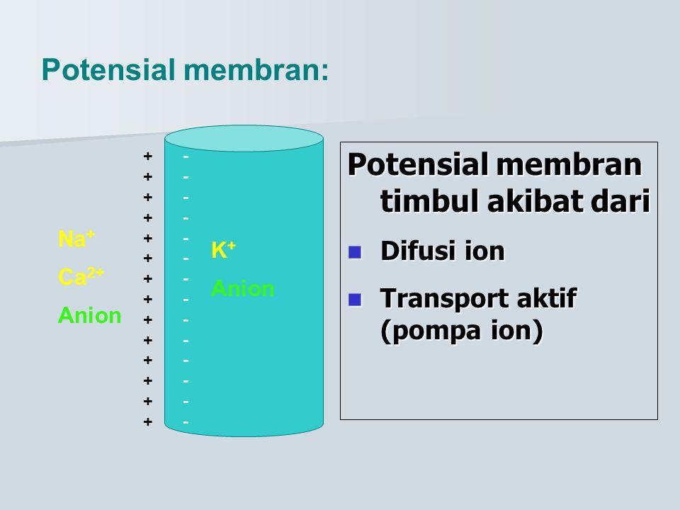 Potensial membran timbul akibat dari