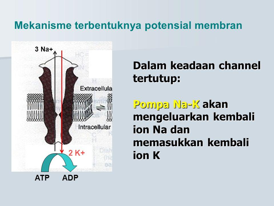 Mekanisme terbentuknya potensial membran