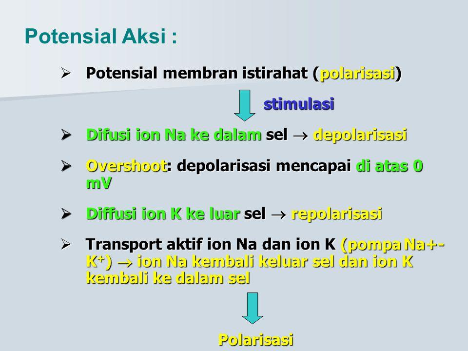 Potensial Aksi : Potensial membran istirahat (polarisasi) stimulasi