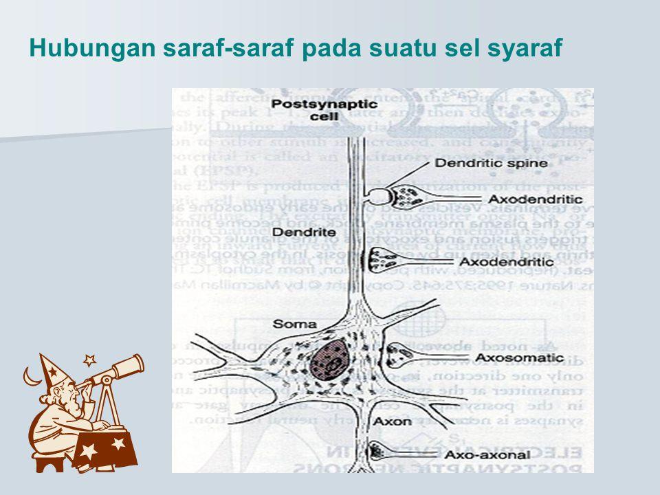 Hubungan saraf-saraf pada suatu sel syaraf