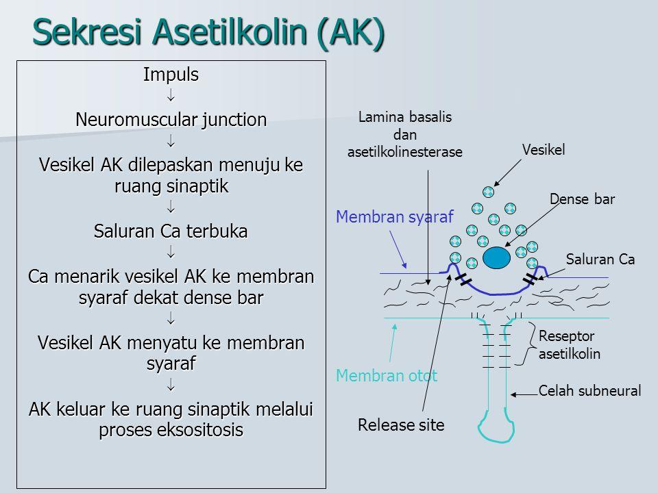 Sekresi Asetilkolin (AK)