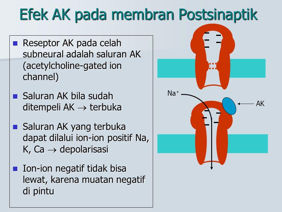 Efek AK pada membran Postsinaptik