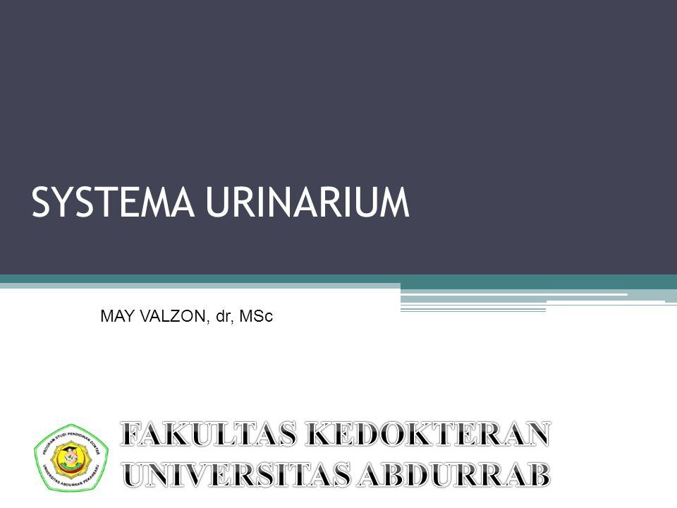 SYSTEMA URINARIUM FAKULTAS KEDOKTERAN UNIVERSITAS ABDURRAB
