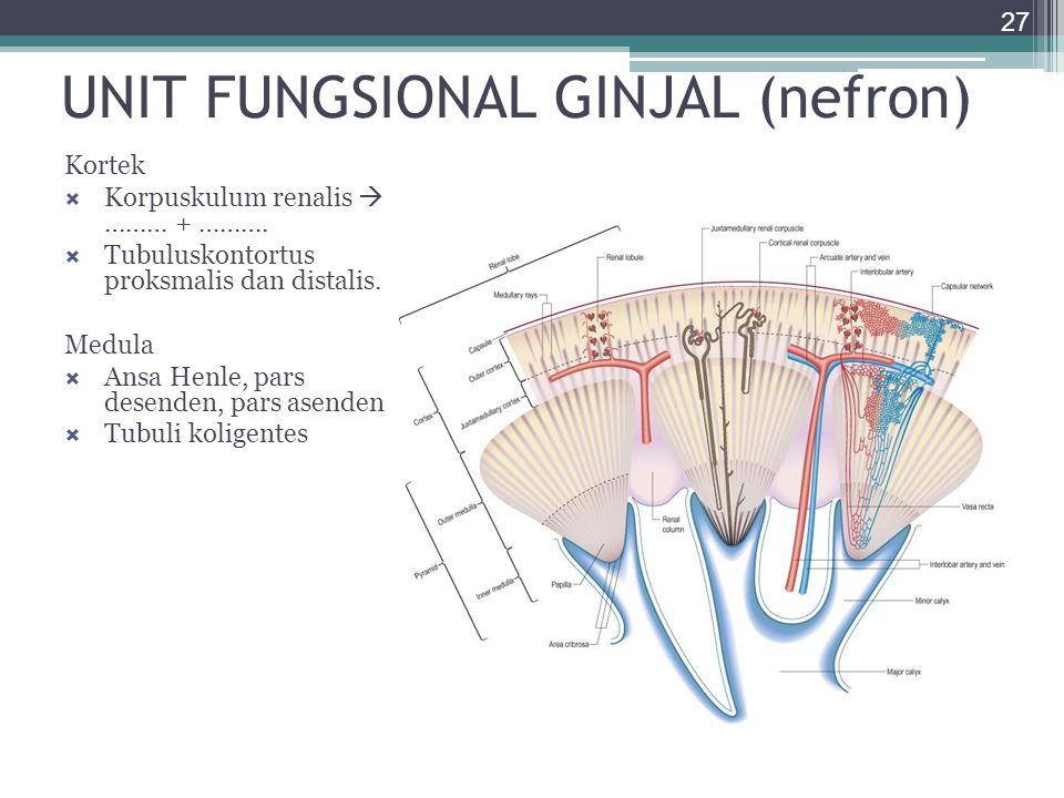 UNIT FUNGSIONAL GINJAL (nefron)