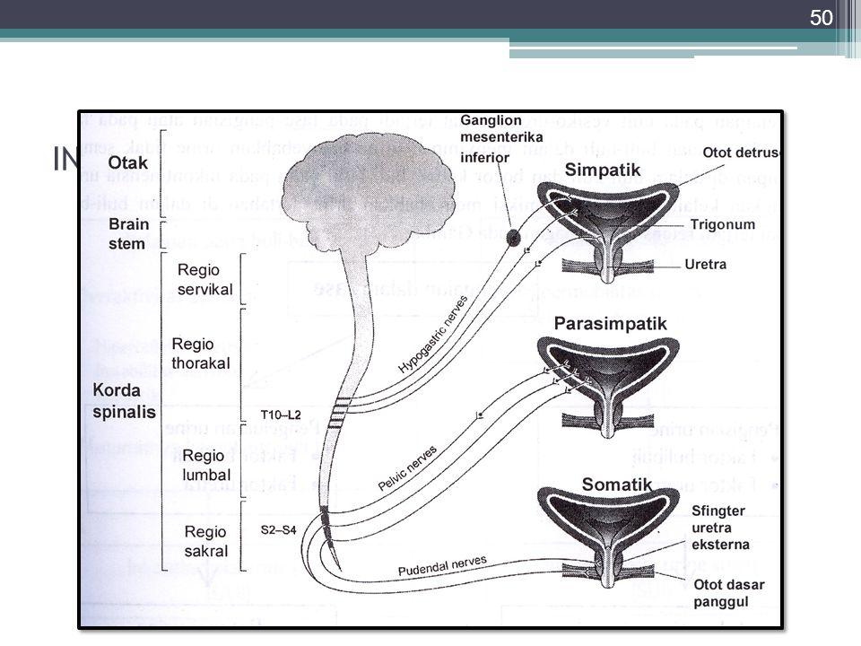 INERVASI (Vesika urinaria & uretra)