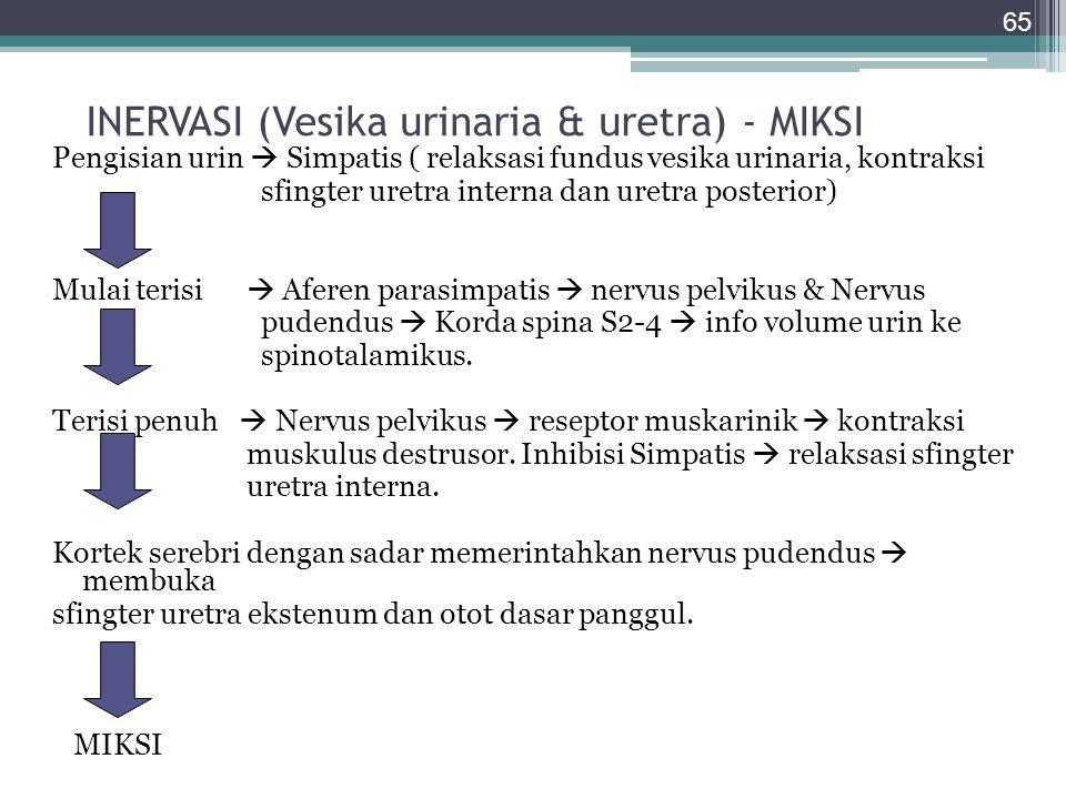 INERVASI (Vesika urinaria & uretra) - MIKSI