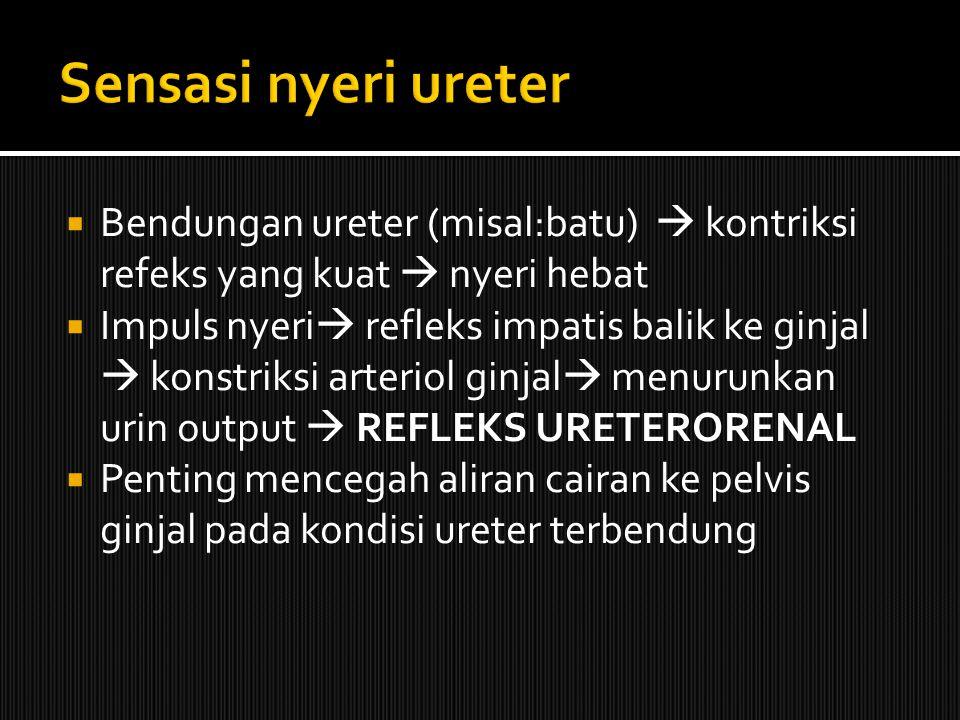 Sensasi nyeri ureter Bendungan ureter (misal:batu)  kontriksi refeks yang kuat  nyeri hebat.