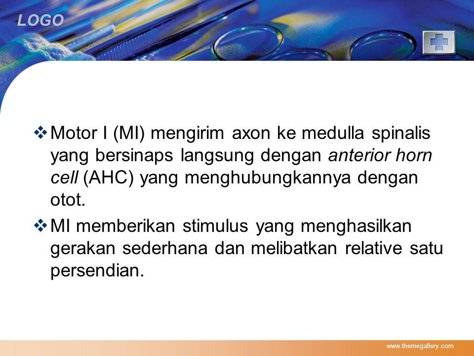 Motor I (MI) mengirim axon ke medulla spinalis yang bersinaps langsung dengan anterior horn cell (AHC) yang menghubungkannya dengan otot.