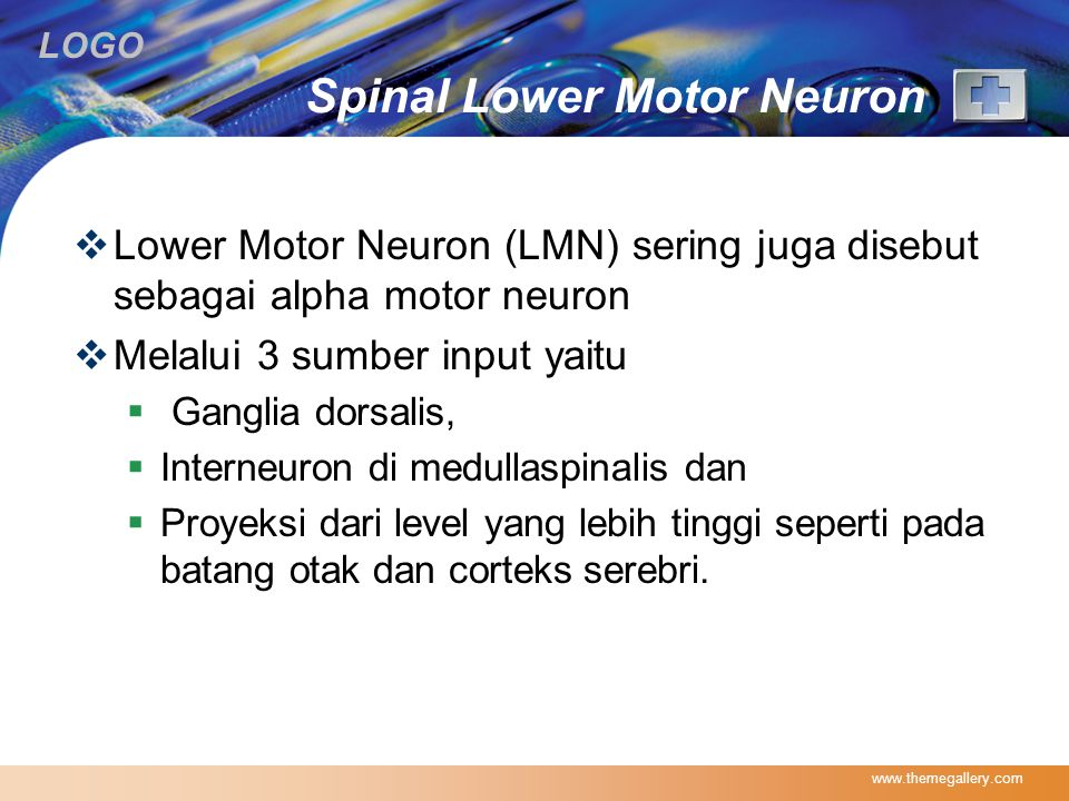 Spinal Lower Motor Neuron