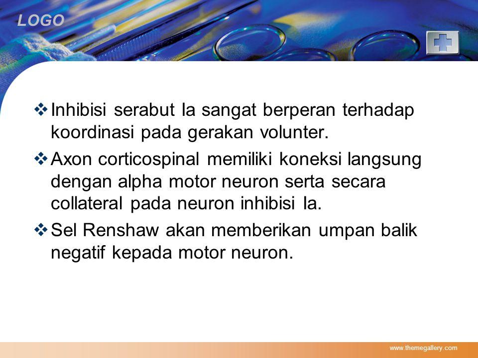 Sel Renshaw akan memberikan umpan balik negatif kepada motor neuron.