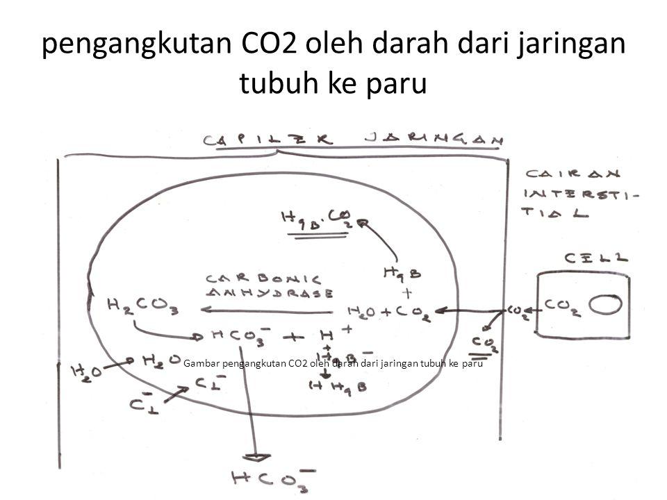 pengangkutan CO2 oleh darah dari jaringan tubuh ke paru