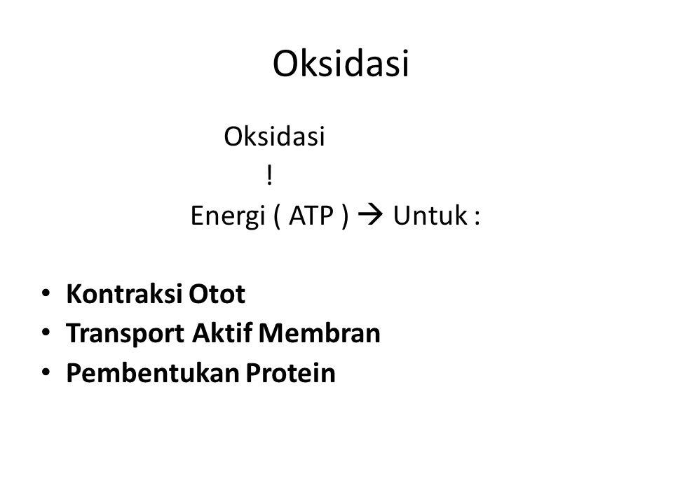 Oksidasi Oksidasi ! Energi ( ATP )  Untuk : Kontraksi Otot