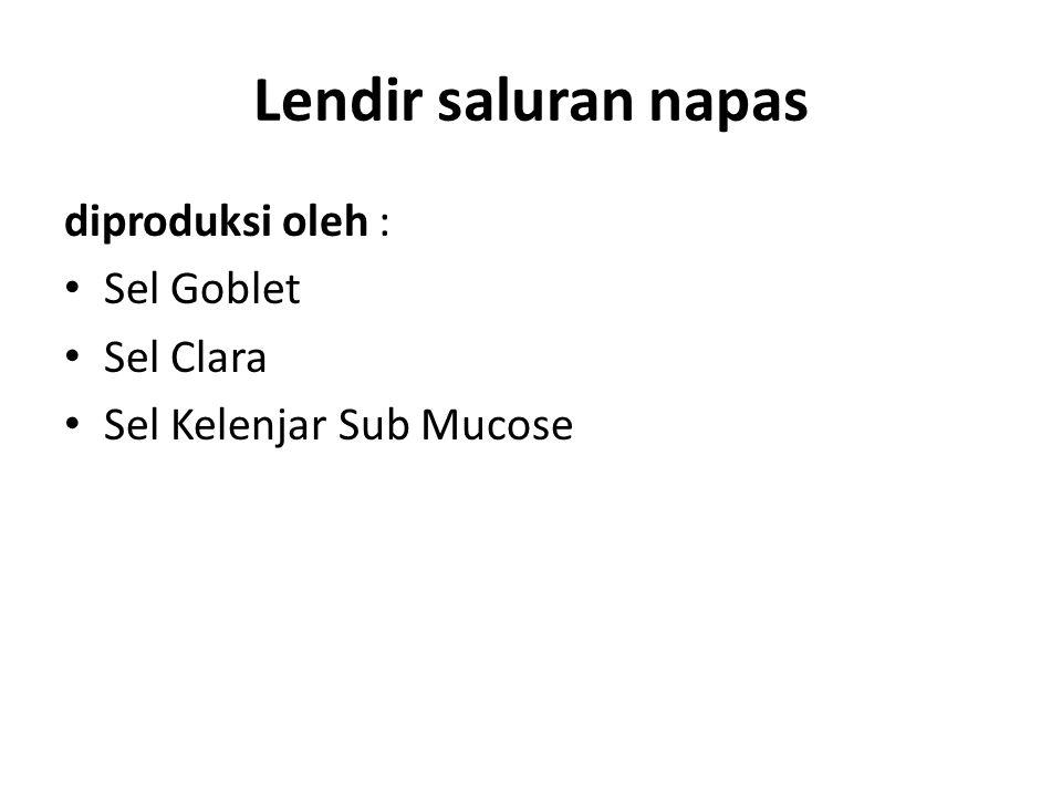 Lendir saluran napas diproduksi oleh : Sel Goblet Sel Clara