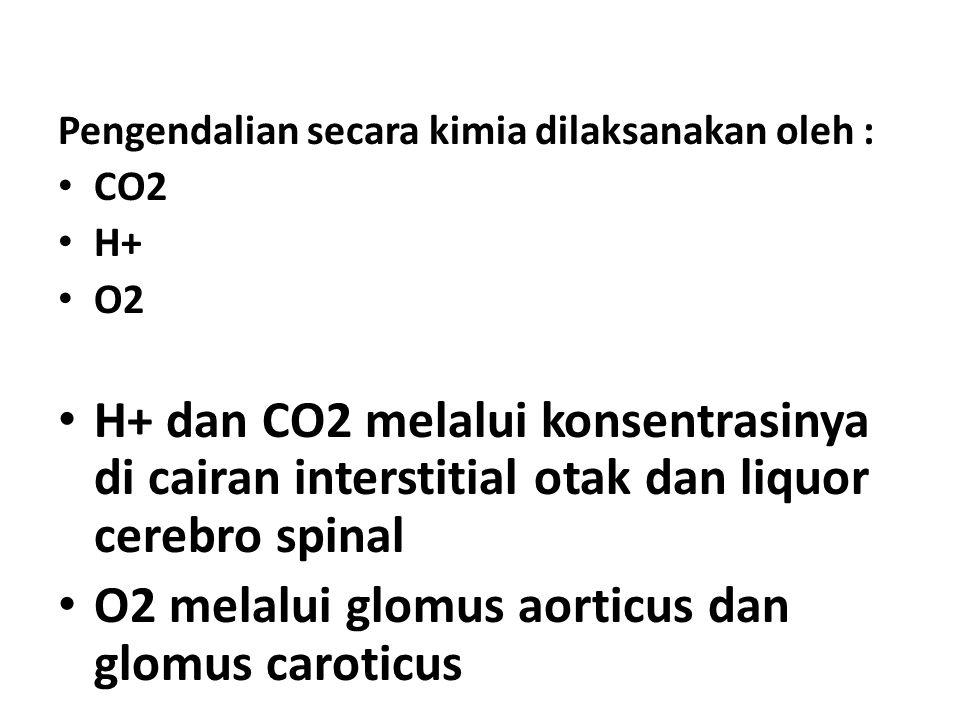 O2 melalui glomus aorticus dan glomus caroticus