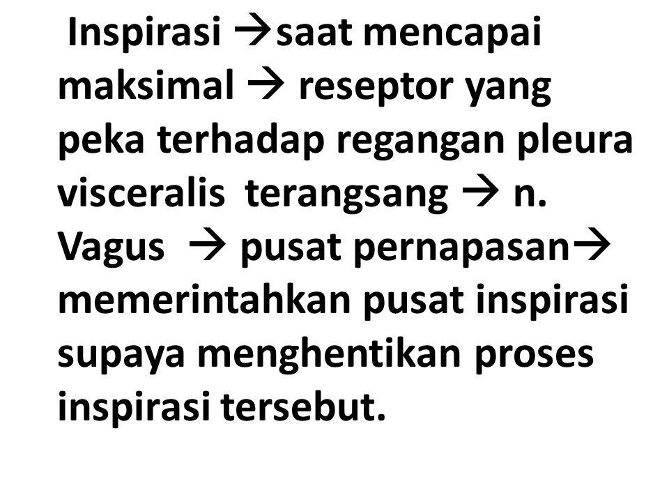 Inspirasi saat mencapai maksimal  reseptor yang peka terhadap regangan pleura visceralis terangsang  n.