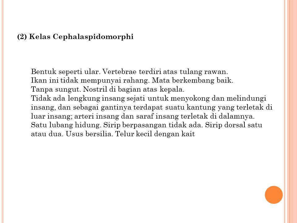 (2) Kelas Cephalaspidomorphi