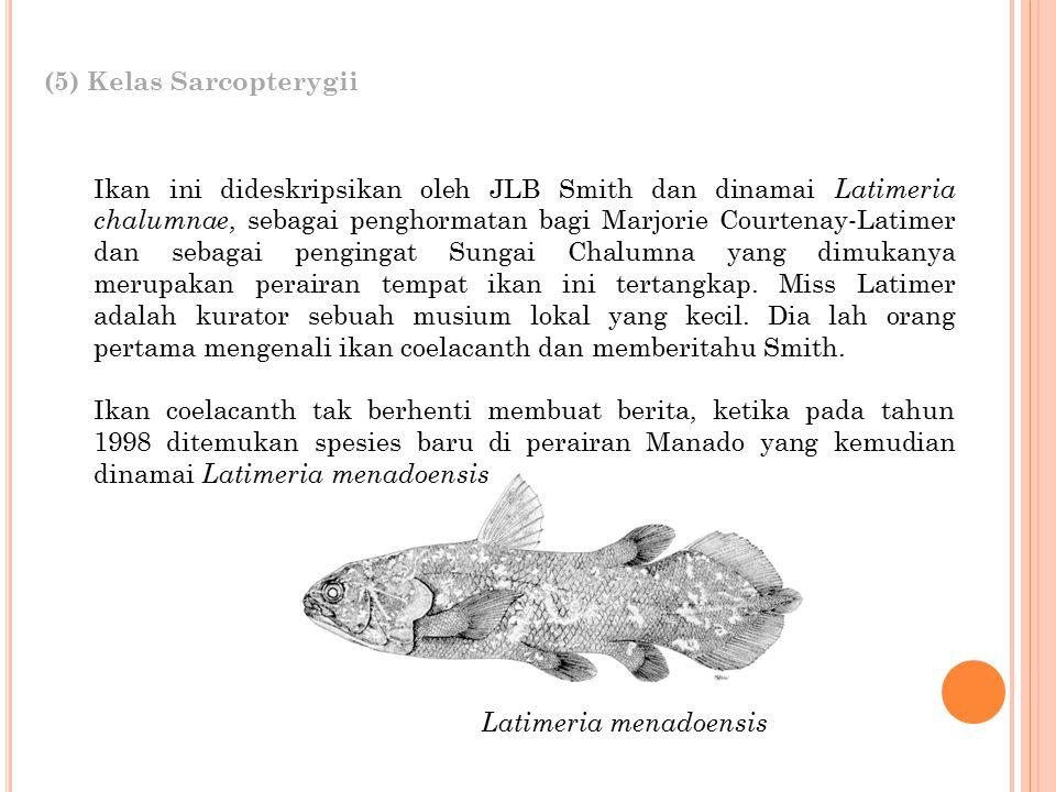 (5) Kelas Sarcopterygii
