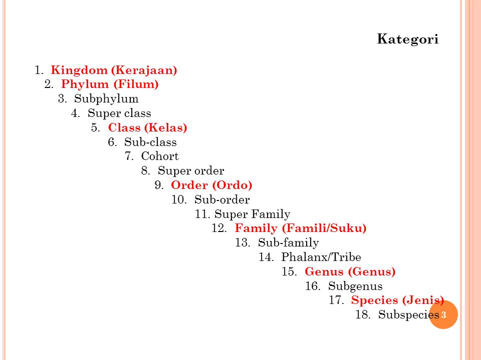 Kategori 1. Kingdom (Kerajaan) 2. Phylum (Filum) 3. Subphylum