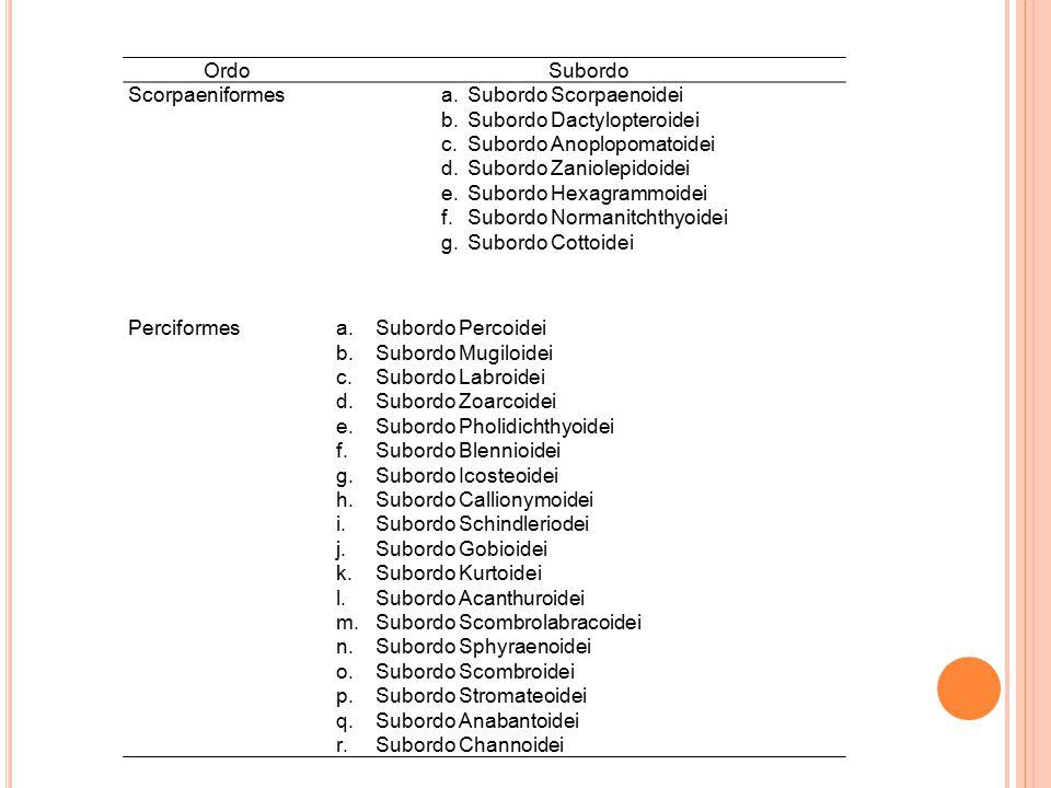 Ordo Subordo. Scorpaeniformes. Subordo Scorpaenoidei. Subordo Dactylopteroidei. Subordo Anoplopomatoidei.