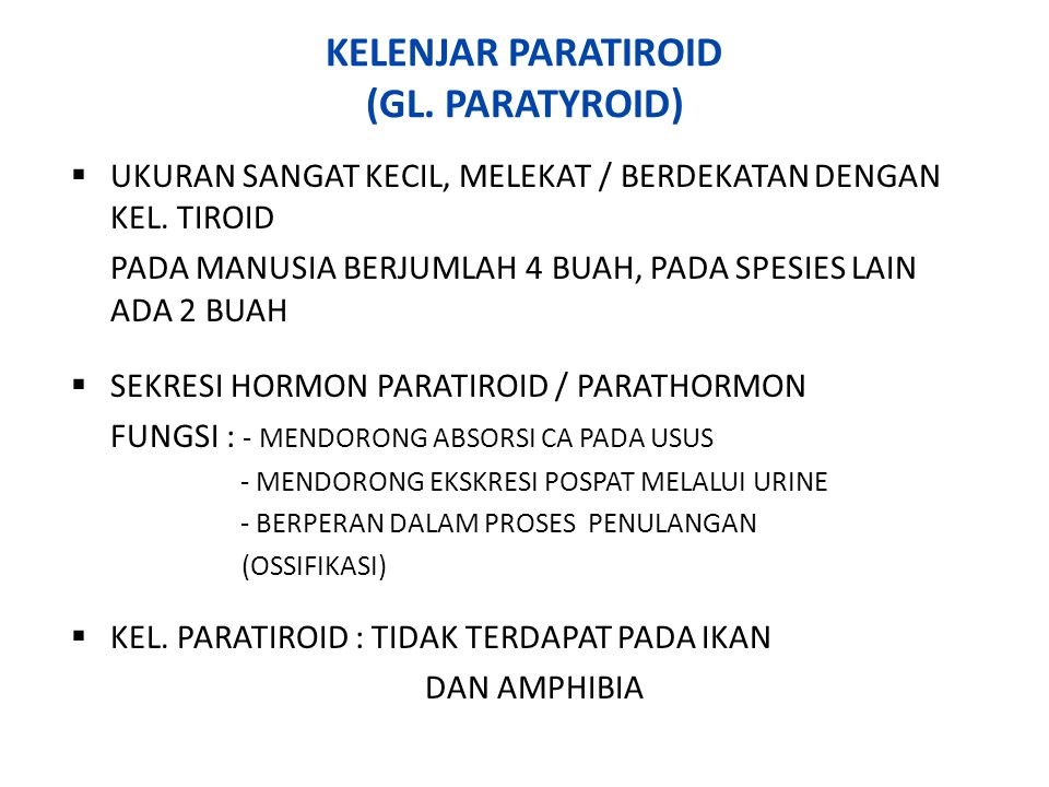 KELENJAR PARATIROID (GL. PARATYROID)