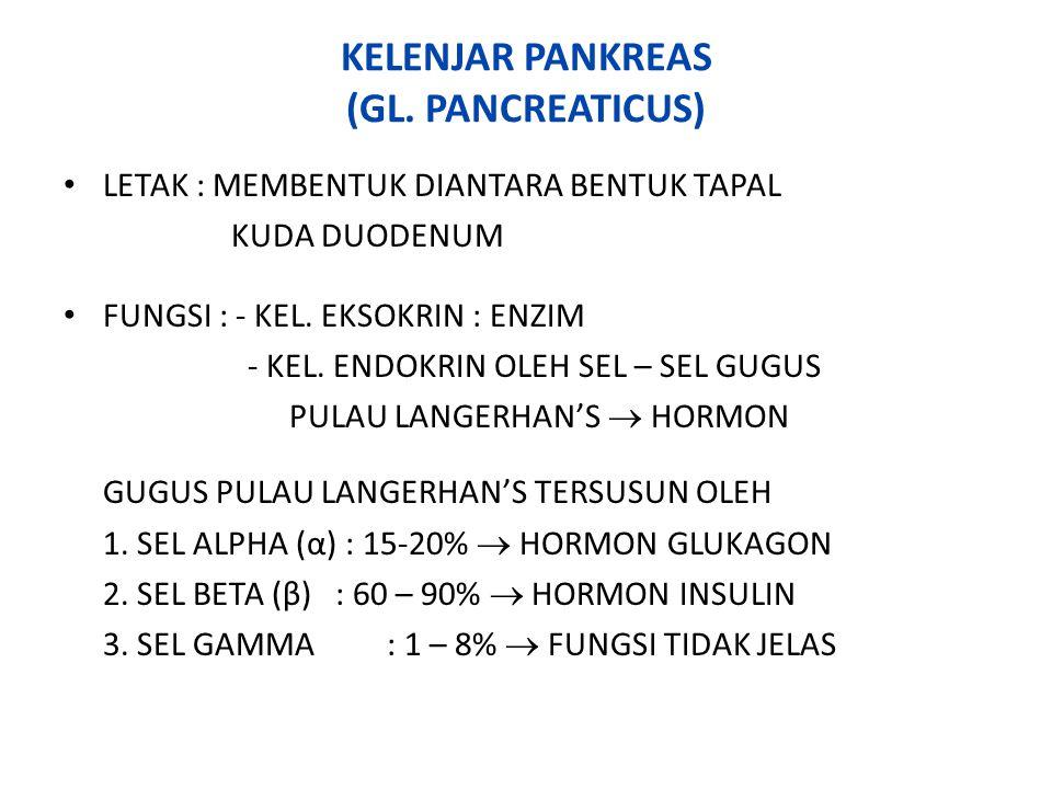 KELENJAR PANKREAS (GL. PANCREATICUS)