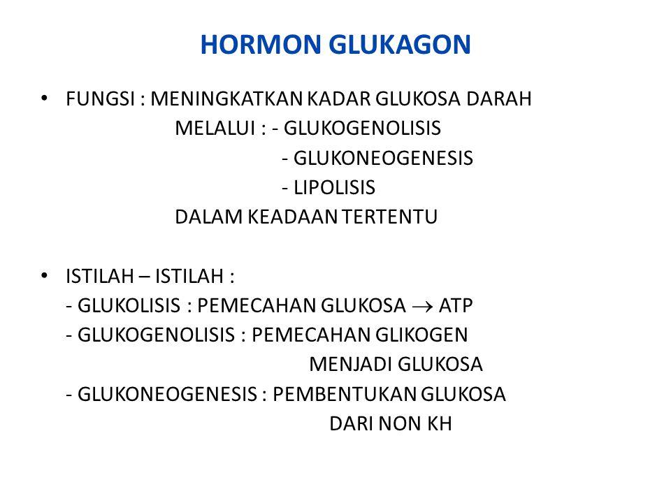 HORMON GLUKAGON FUNGSI : MENINGKATKAN KADAR GLUKOSA DARAH