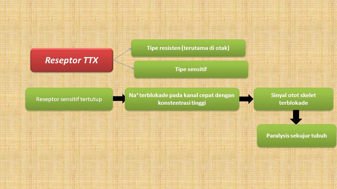 Reseptor TTX Tipe resisten (terutama di otak) Tipe sensitif