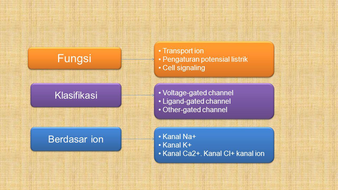 Fungsi Klasifikasi Berdasar ion Transport ion