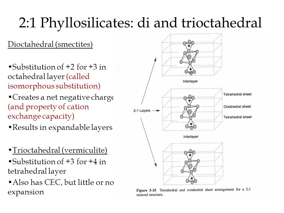 2:1 Phyllosilicates: di and trioctahedral