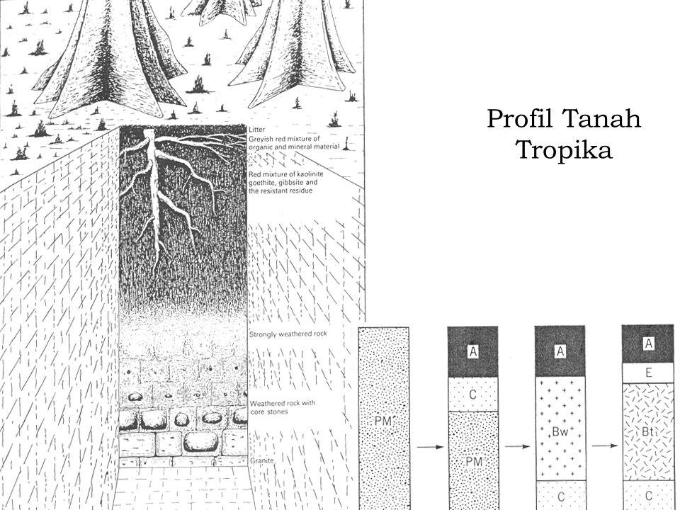 Profil Tanah Tropika