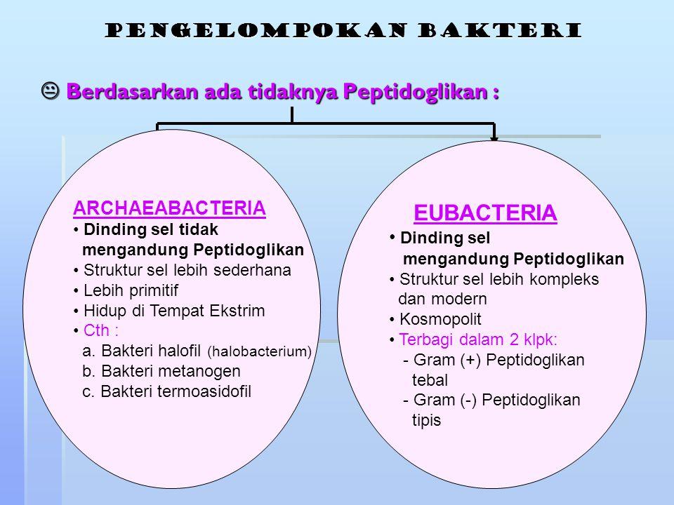 pengelompokan bakteri