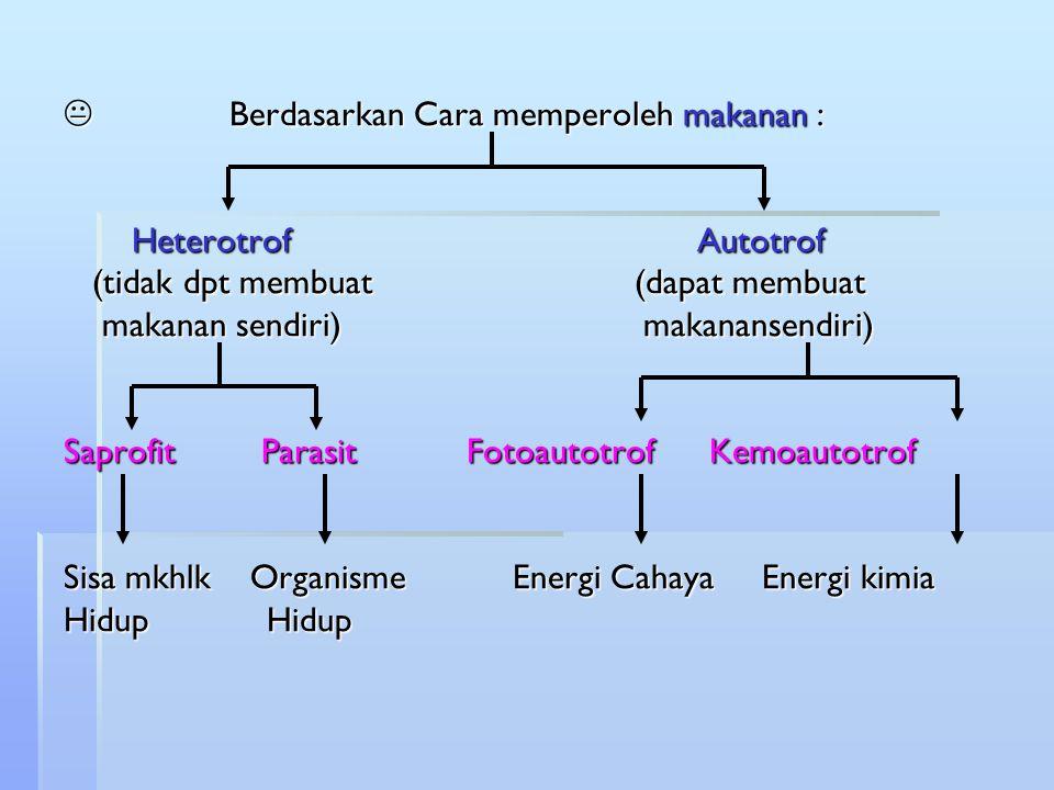 Berdasarkan Cara memperoleh makanan : Heterotrof Autotrof (tidak dpt membuat (dapat membuat makanan sendiri) makanansendiri) Saprofit Parasit Fotoautotrof Kemoautotrof Sisa mkhlk Organisme Energi Cahaya Energi kimia Hidup Hidup