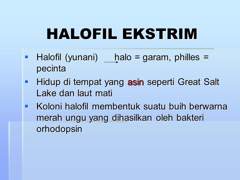 HALOFIL EKSTRIM Halofil (yunani) halo = garam, philles = pecinta