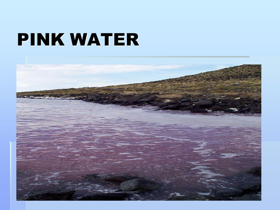 PINK WATER 17
