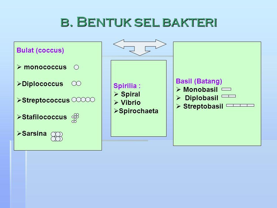 b. Bentuk sel bakteri Bulat (coccus) monococcus Basil (Batang)