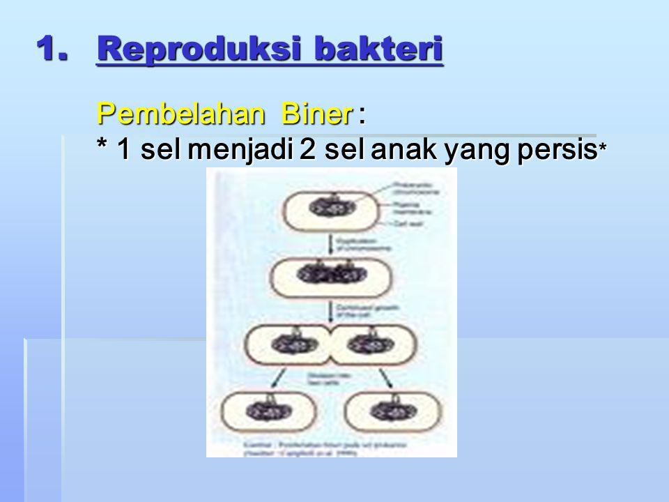 Reproduksi bakteri. Pembelahan Biner :