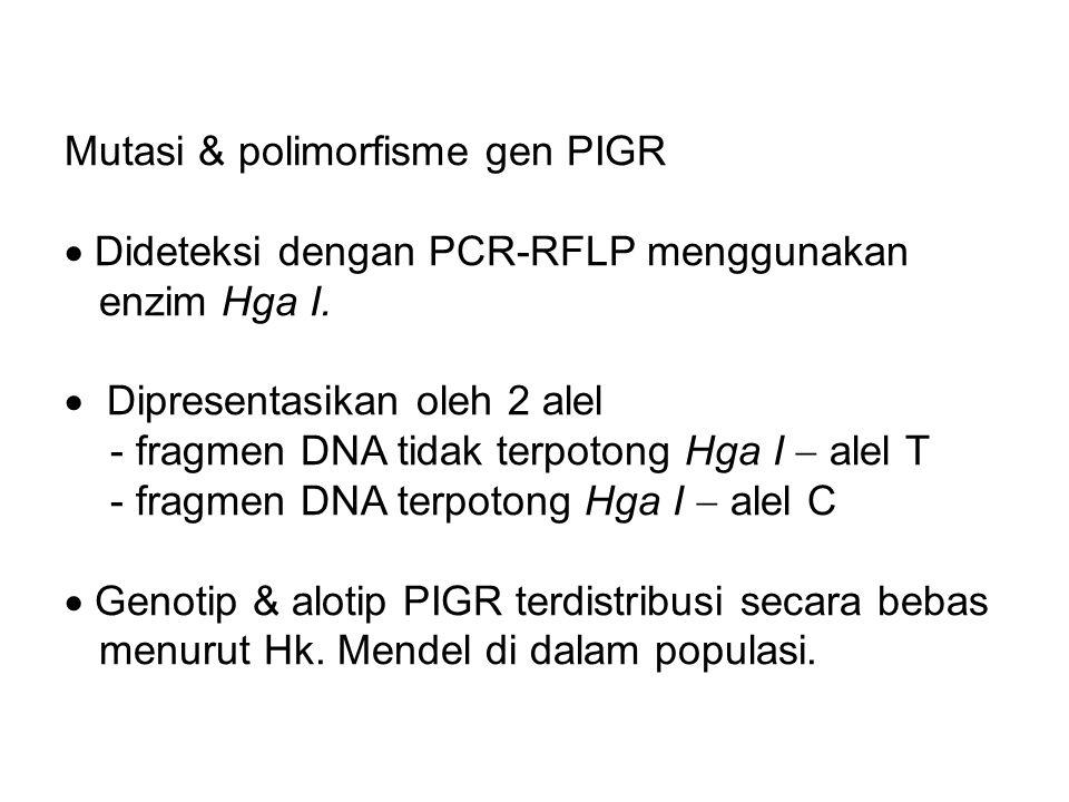 Mutasi & polimorfisme gen PIGR  Dideteksi dengan PCR-RFLP menggunakan enzim Hga I.