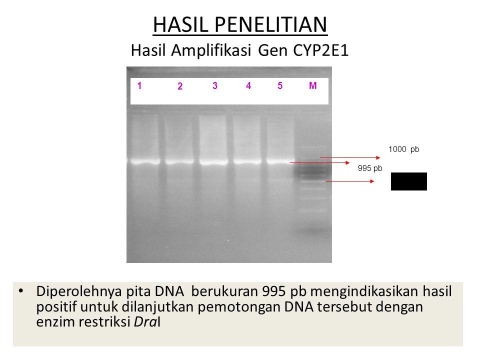 HASIL PENELITIAN Hasil Amplifikasi Gen CYP2E1