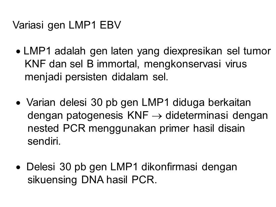 Variasi gen LMP1 EBV  LMP1 adalah gen laten yang diexpresikan sel tumor KNF dan sel B immortal, mengkonservasi virus menjadi persisten didalam sel.