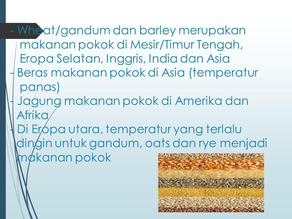 - Wheat/gandum dan barley merupakan makanan pokok di Mesir/Timur Tengah, Eropa Selatan, Inggris, India dan Asia - Beras makanan pokok di Asia (temperatur panas) - Jagung makanan pokok di Amerika dan Afrika - Di Eropa utara, temperatur yang terlalu dingin untuk gandum, oats dan rye menjadi makanan pokok