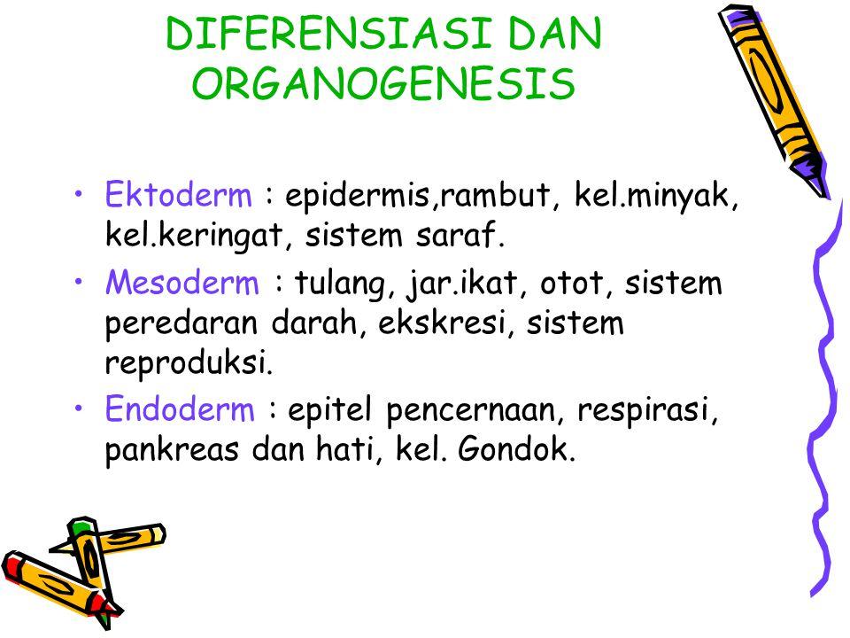 DIFERENSIASI DAN ORGANOGENESIS