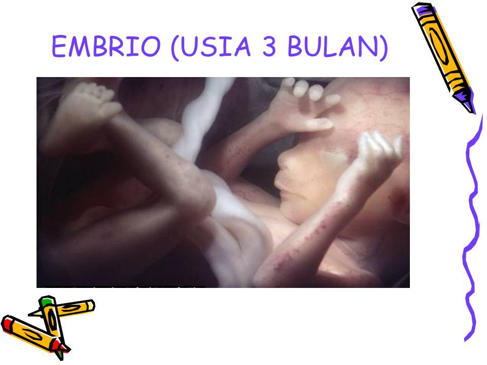 EMBRIO (USIA 3 BULAN)