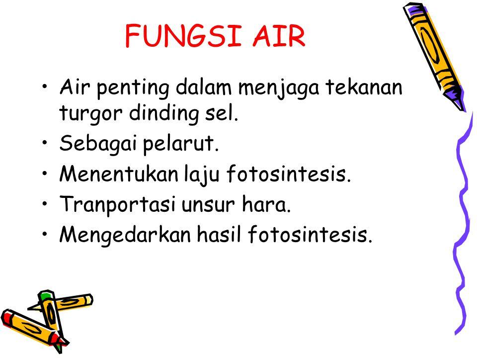 FUNGSI AIR Air penting dalam menjaga tekanan turgor dinding sel.