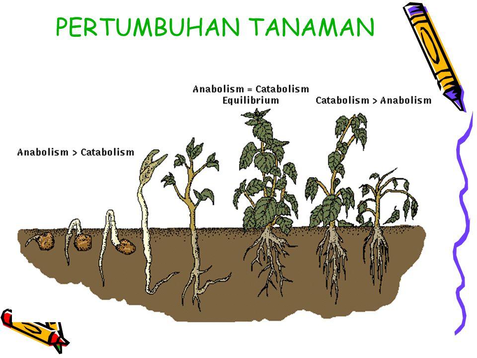 PERTUMBUHAN TANAMAN