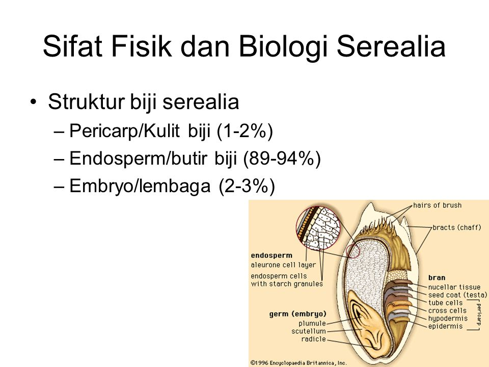 Sifat Fisik dan Biologi Serealia