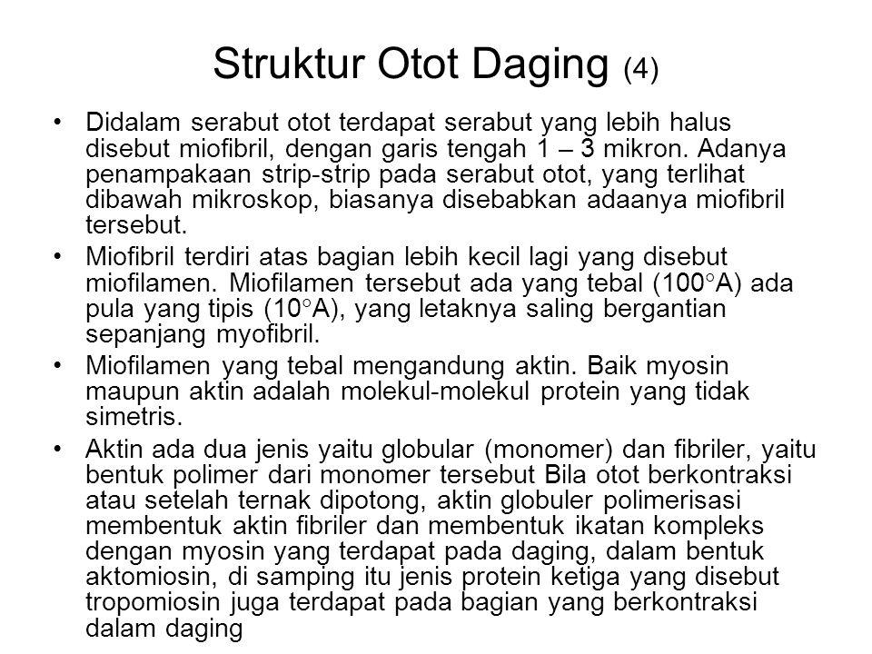 Struktur Otot Daging (4)