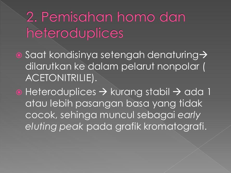 2. Pemisahan homo dan heteroduplices