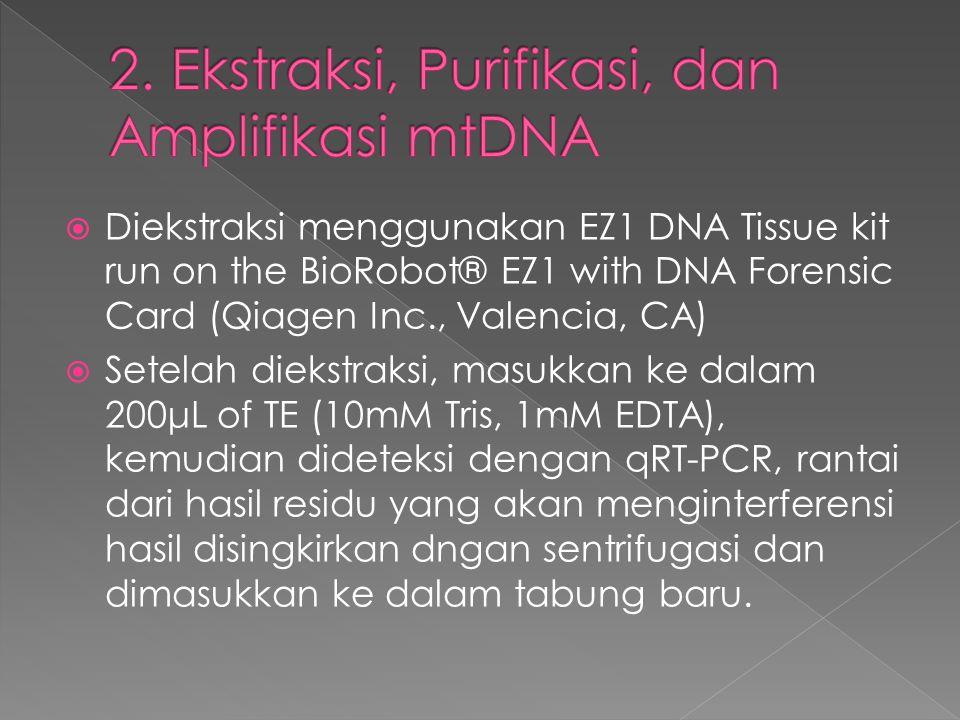 2. Ekstraksi, Purifikasi, dan Amplifikasi mtDNA